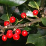 Christmas in Llandudno