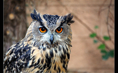 Visit the Owl's Trust in Llandudno