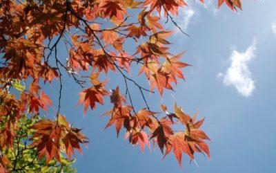 Bodnant Gardens in the Autumn